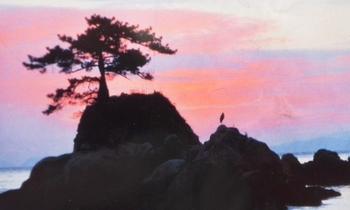 海、岩、鳥.jpg