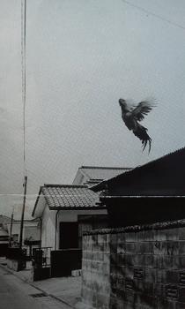 niwatori①.jpg